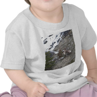 Bighorn Sheeps Shirt