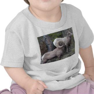 Bighorn Sheeps Tshirt