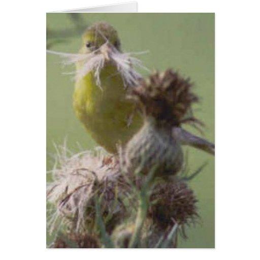 Bigote del Goldfinch Tarjeta De Felicitación