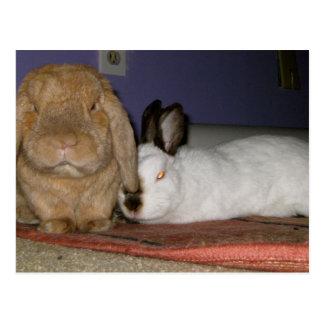 bigwig bunny and annie postcards