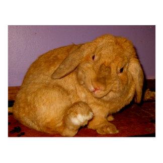 bigwig bunny postcards