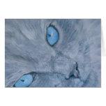 Bijou the Ragdoll Cat Card
