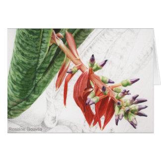 Bilbergia bromelia greeting card