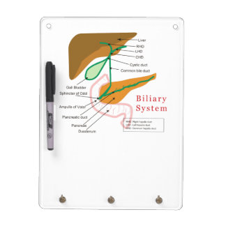 Biliary System Diagram Chart Bile Duct Dry Erase Board