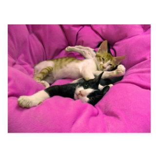 Bill desapasible - relaje máximo - gatos lindos postales