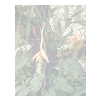 Billergia Venezuelana Pink flowers Letterhead