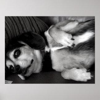 Billy: Beagle Dog Print