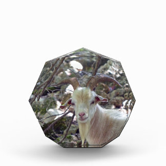 Billy Goat Acrylic Award