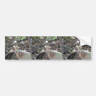 Billy Goat Bumper Sticker