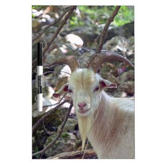 Billy Goat Dry Erase Board