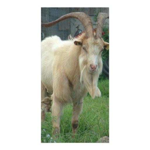 Billy Goat Gruff Photo Card Template