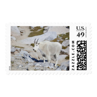 Billy goat, in Upper Enchantments Postage Stamp