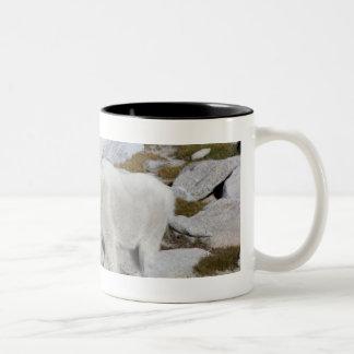 Billy goat, in Upper Enchantments Two-Tone Coffee Mug
