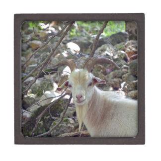 Billy Goat Jewelry Box