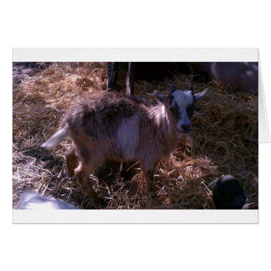 Billy Goat Joel Card