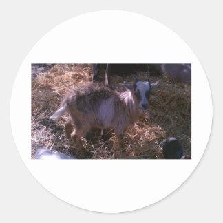 Billy Goat Joel Classic Round Sticker