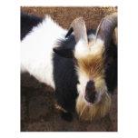 Billy Goat Letterhead Template