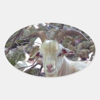 Billy Goat Oval Sticker