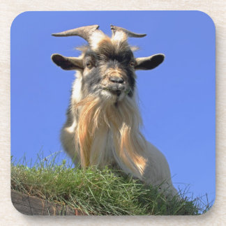 Billy Goat Photo Drink Coasters