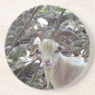 Billy Goat Sandstone Coaster