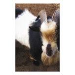 Billy Goat Stationery Paper