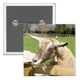 Billy la insignia del botón de la cabra pins