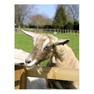 Billy la postal de la cabra