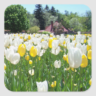 Biltmore Tulips Square Sticker