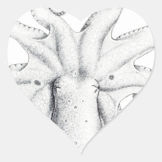 Bimaculatus del pulpo pegatina en forma de corazón
