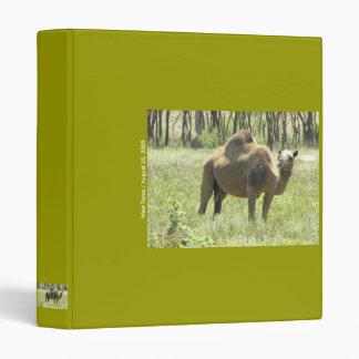 Binder Camel in West Texas