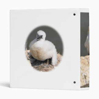 Binder: Gannet chick Binder