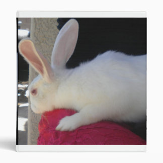 Binder white rabbit bunny hop