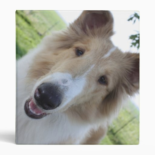 Binder with rough collie