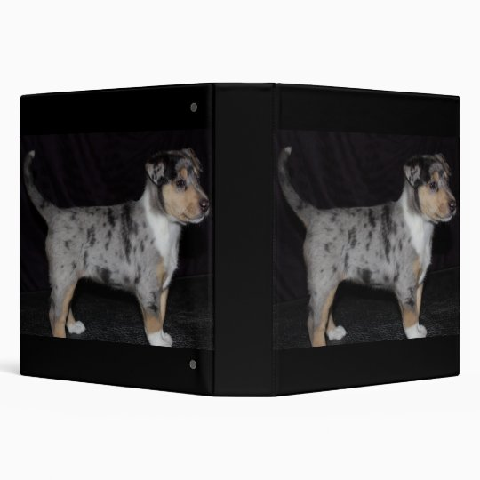Binder with smooth blue collie pup