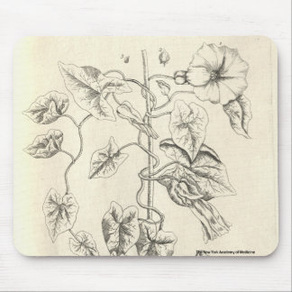 Bindweed Mouse Pad