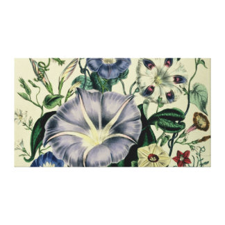 Bindweed, plate 26 from 'The Ladies Canvas Print
