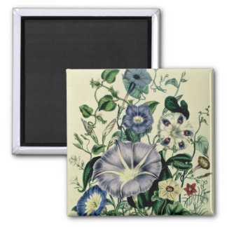 Bindweed, plate 26 from 'The Ladies Magnet
