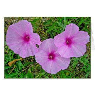 Bindweed Wildflower Series Card