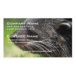 Binturong Bear Business Card