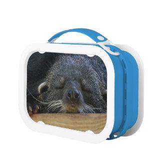 Binturong Lunch Box