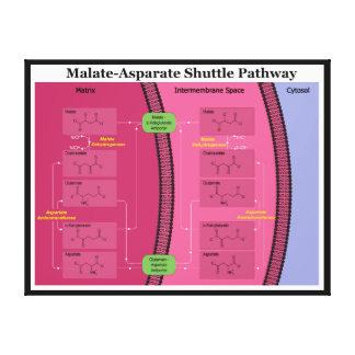 Biochemical Malate Aspartate Shuttle Diagram Canvas Print