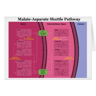 Biochemical Malate Aspartate Shuttle Diagram Card
