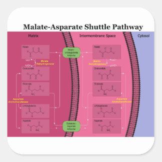 Biochemical Malate Aspartate Shuttle Diagram Square Sticker