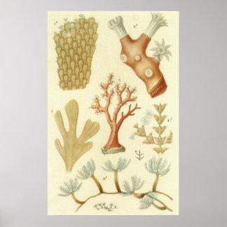 Biología coralina del libro de texto de los animal impresiones