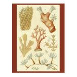 Biología coralina del libro de texto de los animal tarjeta postal