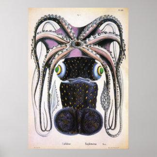 Biología de la ciencia del vintage, pulpo gigante póster