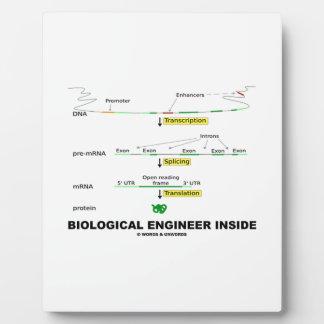 Biological Engineer Inside Plaque