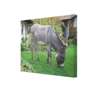 Biological Lawn-Mower On Four Hooves Canvas Print