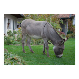 Biological Lawn-Mower On Four Hooves Poster
