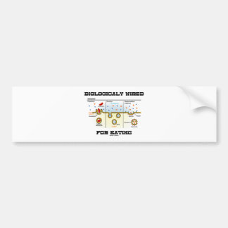 Biológico atado con alambre para comer Endocytosi Pegatina De Parachoque